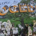 Dog Mural in Dunedin Florida
