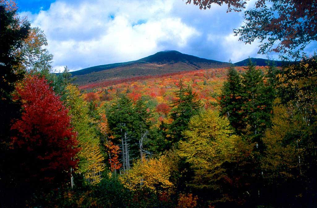 Fall Foliage by Rail