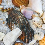 Shells on Panama City Beach