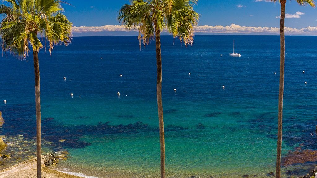 Palms at Hamilton Cove