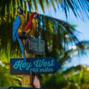 Parrots at Margaritaville Beach Resort