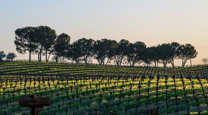 Bianchi Winery, Paso Robles, California