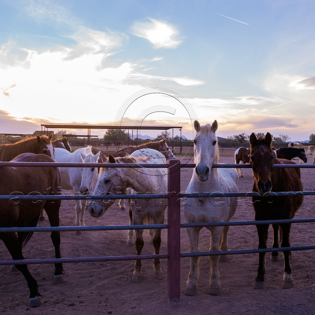 Horses at White Stallion Ranch, Tucson Arizona