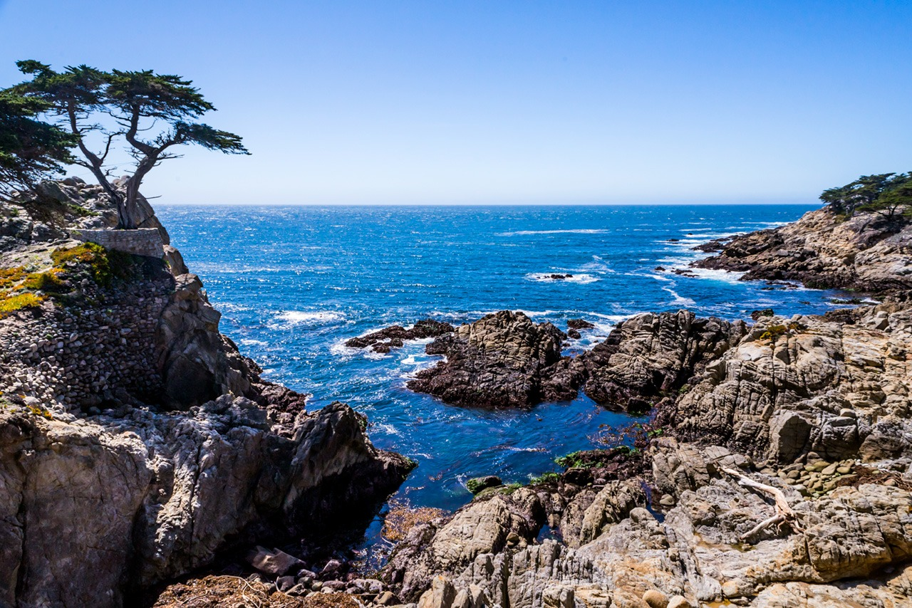 Lone Cypress photo credit: John Cameron
