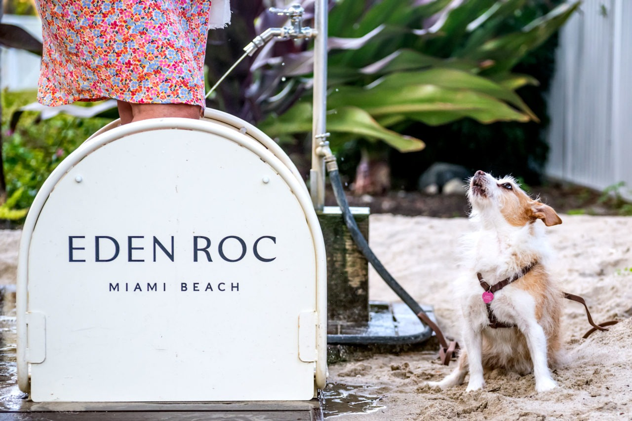 Lucy at Eden Roc Miami Beach