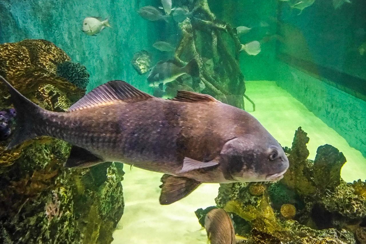 Rumfish Aquarium